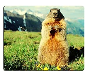 Groundhog Marmot National Park Wildlife Mouse Pads Customized Made to Order Support Ready 9 7/8 Inch (250mm) X 7 7/8 Inch (200mm) X 1/16 Inch (2mm) High Quality Eco Friendly Cloth with Neoprene Rubber Luxlady Mouse Pad Desktop Mousepad Laptop Mousepads Comfortable Computer Mouse Mat Cute Gaming Mouse pad