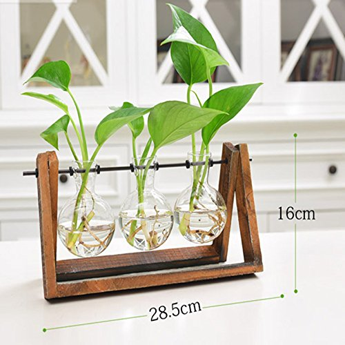 Cibeat Creative Plant Glass Hydroponic Container Terrarium Desk Decor with Wood Stand Flower Pot Home Decoration by Cibeat