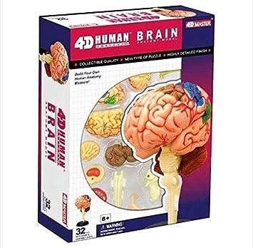 4d Puzzle cerebro humano anatomía Modelo 3d serie estudio nuevo ...