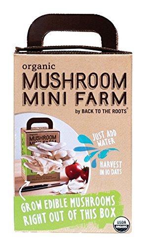51ZZoHiUAmL - Organic Mushroom Mini Farm