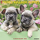 French Bulldog Puppies 2020 Wall Calendar (Dog Breed Calendar)