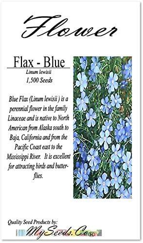 500 BLUE FLAX PERENNIAL SEEDS 500 LINUM PERENNE BLUE FLAX SEEDS