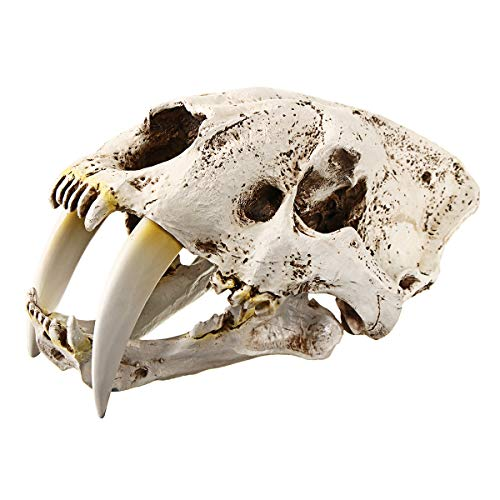 1:1 Saber-Tooth Tiger Resin Skull Imitations Collection for sale  Delivered anywhere in USA