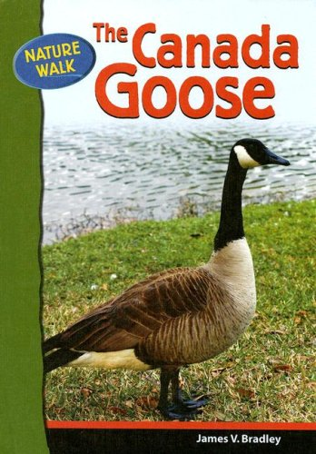 The Canada Goose (Nature Walk)