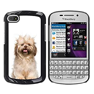 Vortex Accessory Hard Protective Case Skin Cover For Blackberry Q10 - Norfolk Terrier Puppy Glen Of Imaal Dog