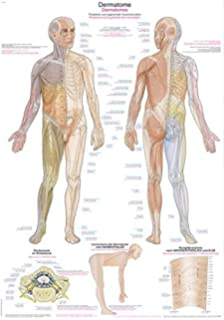 Dermatomes Anatomical Chart: Amazon.de: Bücher on