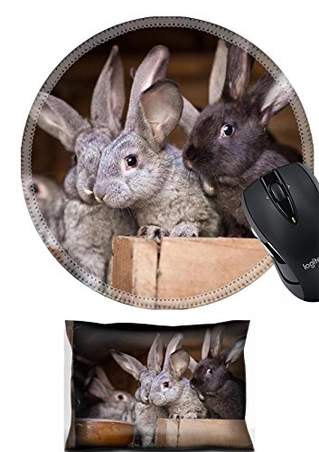 MSD Mouse Wrist Rest and Round Mousepad Set, 2pc Wrist Support design: 11533654 Young rabbits popping out of a hutch European Rabbit Oryctolagus cuniculus