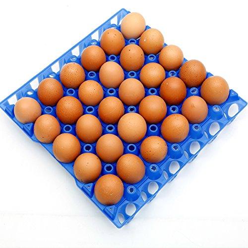 Fam & Ranch huevera de plástico bandejas para 30 piezas huevos huevo bandejas de almacenamiento: Amazon.es: Jardín