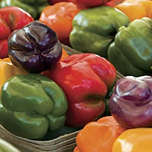 Sweet Rainbow Mix Bell Pepper Seeds (Non-gmo) 150 Seeds Upc 643451295993