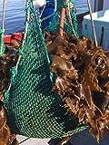 VitaminSea Organic Kombu Sugar Kelp - Whole Leaf 4 oz / 112 G Saccharina Maine Coast Seaweed - USDA & Vegan Certified - Kosher - Great For Keto - Wild Atlantic Hand Harvested - Sun Dried (KW4)