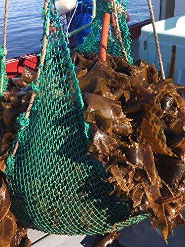 VitaminSea Organic Kombu Sugar Kelp - Whole Leaf 4 oz Saccharina Maine Coast Seaweed - USDA & Vegan Certified - Kosher - Great For Keto or Paleo Diets - Wild Atlantic Hand Harvested - Sun Dried (KW4)