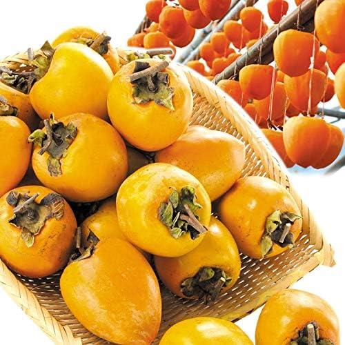コロナ 渋柿 奈良県立医大、柿渋が唾液中の新型コロナを不活化させることを確認