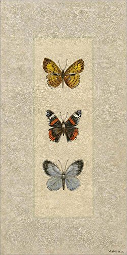 Art Butterfly Trio (Great Art Now Butterfly Trio II by Wendy Russell Laminated Art Print, 10 x 20 inches)