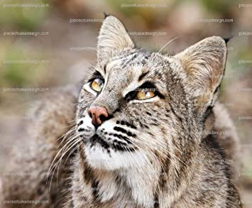 Amazoncom 14 Zoo Bobcat Birthday Edible Image CakeCupcake