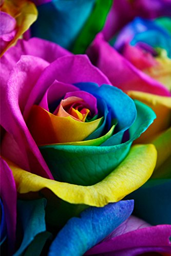 Flower explosion fresh rainbow roses bouquet by 36 stems for Where to buy rainbow roses