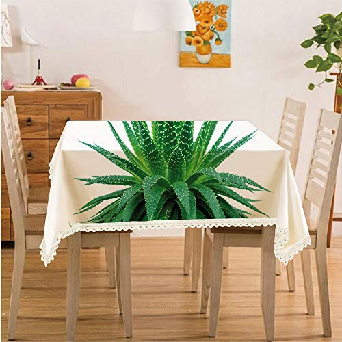 Plant,Rectangle Polyester Linen Tablecloth/Medicinal Aloe Vera with Vibrant Colors Indigenous Species Alternative Natural Remedy/for Dinner Kitchen Home Décor,60