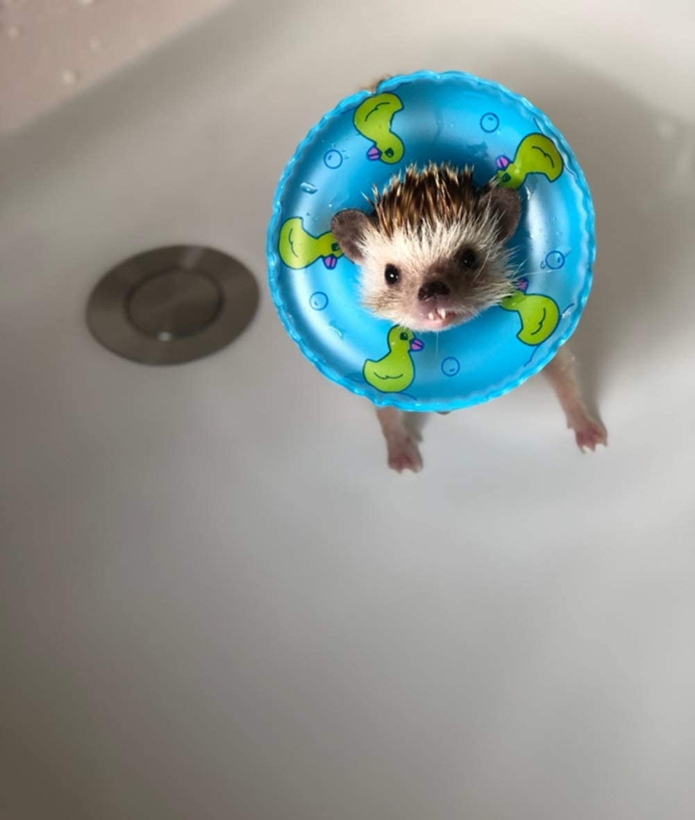 HAICHEN TEC 3.74 Inch Small Animal Hedgehog Fancy Mouse Bath Collar Ring Yellow Duck Transparent Swimming Rings Hamster Swim Life Jacket Float Coat Photo Shoot Toy Cage Accessories 6 Pack