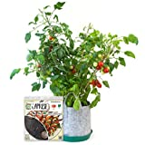 Caprese Garden Full Kit includes Container Soil Seedsheet organic nonGMO seeds and recipes- AS SEEN ON SHARK TANK