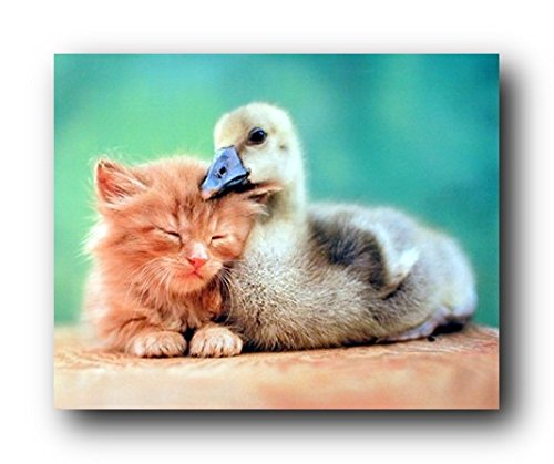 Cute Cat and Duckling Friends Kids Room Animal Art Print Poster (16x20)]()