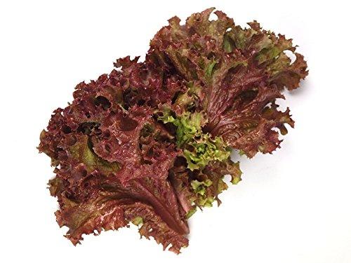 Semillas de lechuga Lollo Rossa - Lactuca sativa Legutko