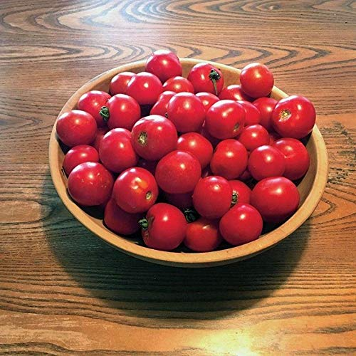 (Red Racer F1 Hybrid Tomato Seeds - High in sugars and yet also very tart!!(10 - Seeds))