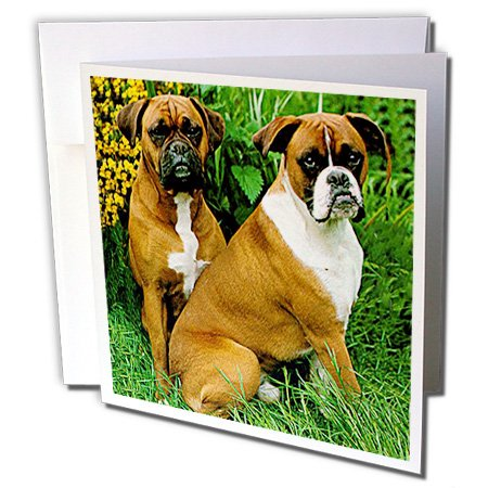 Dogs Boxer - Boxer - 6 Greeting Cards with envelopes (gc_405_1) (Boxer Dog Greeting Cards)