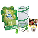 Insect Lore Live Praying Mantis Gift Set Habitat Kit
