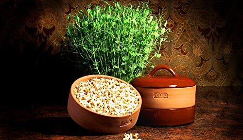 Amazon.com: Arcilla como Gaia sprouter nutritivos semillas ...