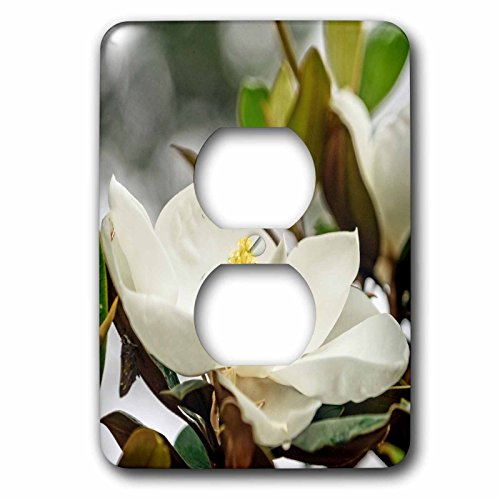 Boehm Photography Flower - Magnolia Flower in the garden - Light Switch Covers - 2 plug outlet cover (lsp_245578_6)