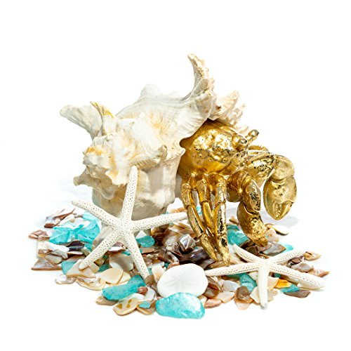 Nautical Crush Trading Gold Crab Figurine w/Nautical Mix | Golden Hermit Crab w/Shell Statue TM …