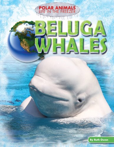 Beluga Whales (Polar Animals: Life in the Freezer)
