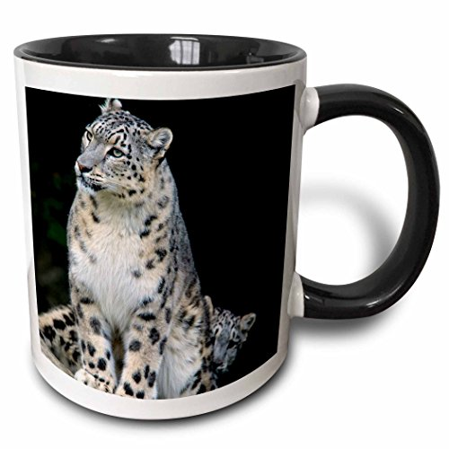 3dRose Danita Delimont - Leopards - Snow Leopard, Panthera uncia, Asia - AS26 AMR0000 - Andres Morya Hinojosa - 15oz Two-Tone Black Mug (mug_132849_9)