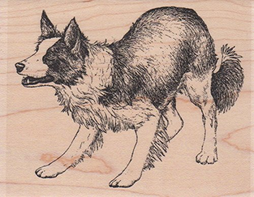 Border Collie Herding Dog Wood Mounted Rubber Stamp (F7666)