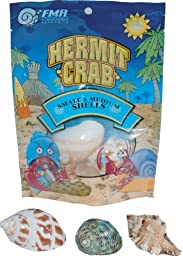 Florida Marine Research SFM33332 Hermit Crab Shell, Medium,  3-Piece per Pack