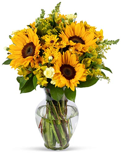 - Benchmark Bouquets Rays of Sunshine, With Vase (Fresh Cut Flowers)