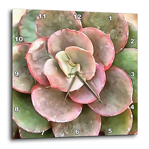 3dRose Taiche - Acrylic Art - Succulent - Succulent Study in Green and Coral - 10x10 Wall Clock (DPP_308640_1)