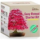Kit Haga crecer su propio Bonsái - Cultiva fácilmente 4 tipos de árboles Bonsái con nuestro kit de semillas de Bonsái…