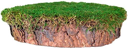 Supermoss 23340) Mossy Tree Stump, Fresh green 10in Dia. ...