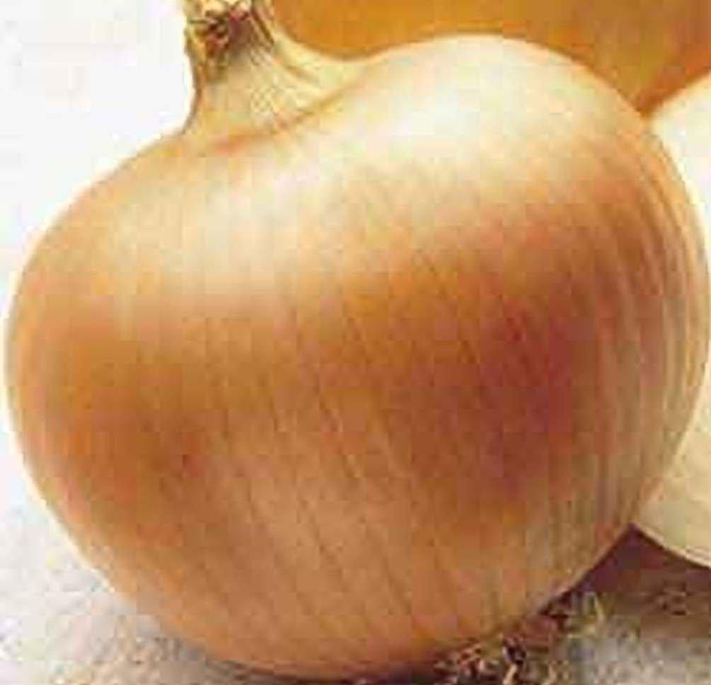 Onion Yellow Sweet Spanish Great Heirloom Vegetable 1 Lb Seeds by Seed Kingdom