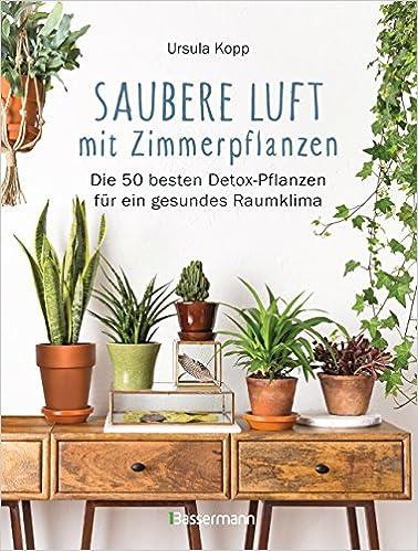 Saubere Luft Mit Zimmerpflanzen Die 50 Besten Detox Pflanzen Fur