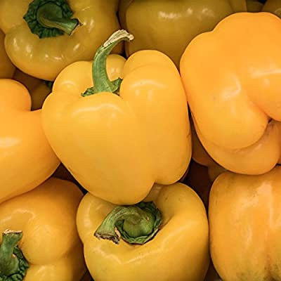 Canary Bell Sweet Pepper Garden Seeds - Non-GMO, Vegetable Gardening Seed - Yellow Bell Peppers