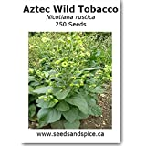 Aztec Wild Tobacco (Nicotiana rustica) 0.1g 250+ Seeds. 1g, 10g, 100g quantity options (0.1g 250+ Seeds)