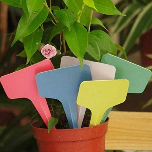 100pcs 6x3CM Gardening Plastic Plant Flower T-Type Tags Marker Labels - Garden Tools - Garden Labels by Ochoos Gardening