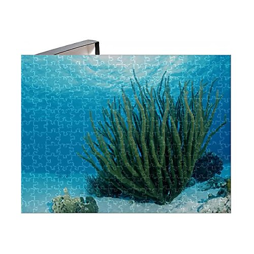 Media Storehouse 252 Piece Puzzle of Corals on sandy ground, Tobago, Caribbean Sea (12554333) (Sea Puzzle Life Floor)