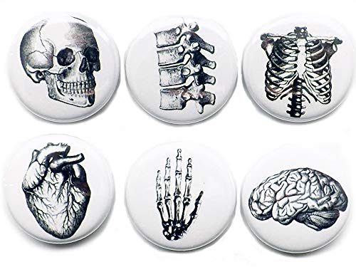 - Set of 6 Anatomy MAGNETS 1 Inch Brain Skull Anatomy Hand Anatomical Heart Vertebrae Human Body Geekery Skeleton stocking stuffer party favor med student gift