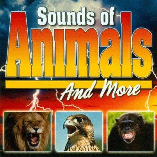 Zoo Birds - Monkeys, Tigers, Birds, Lions in Zoo