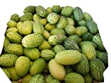 HEIRLOOM NON GMO Cucamelon Mini Cucumber 25 seeds