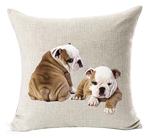 Cotton Linen Lovely Animal Abstract Funny Adorable Pet Dogs Art Photo English Bulldog Throw Pillow Covers Cushion Cover Decorative Bedroom Living Room Square 18 Inches (Funny Dog Pictures)