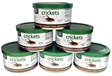 Exotic Nutrition Canned Crickets 35 g / 1.2 oz (6 Pack)