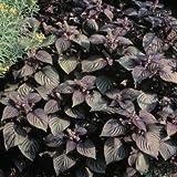 Outsidepride Perilla Frutescens - 1000 Seeds